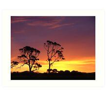 Red Gums in a Kalangadoo sunset Art Print