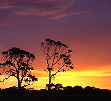 Red Gums in a Kalangadoo sunset by Nick Hunt