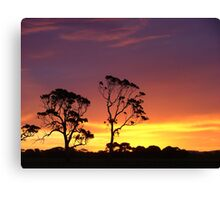 Red Gums in a Kalangadoo sunset Canvas Print
