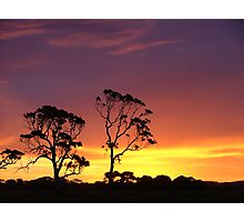 Red Gums in a Kalangadoo sunset Photographic Print