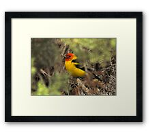 """Western Tanager - """"Hiding Out"""" Framed Print"""