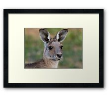 Eastern Grey Kangaroo Portrait Framed Print