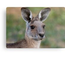 Eastern Grey Kangaroo Portrait Metal Print