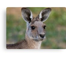 Eastern Grey Kangaroo Portrait Canvas Print