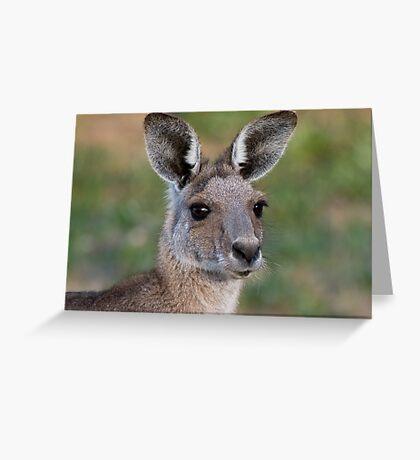 Eastern Grey Kangaroo Portrait Greeting Card