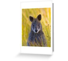 Lonely Swamp Wallaby 1 Greeting Card