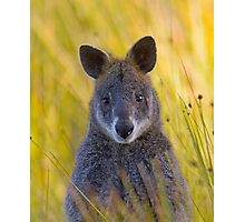 Lonely Swamp Wallaby 1 Photographic Print