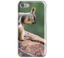 Yellow-footed Rock Wallaby 1 iPhone Case/Skin