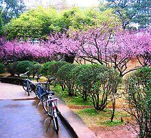 Blossom road by Yulia Dreyzis