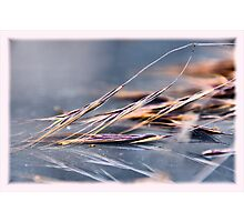 Just barley Photographic Print