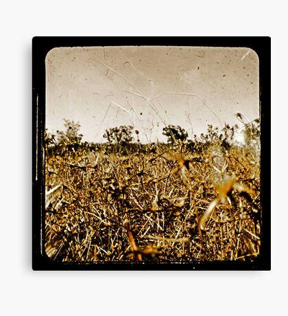 Wild Fields Canvas Print