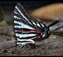 Butterfly 66 Inspired by my girl SkyFox !  by bamagirl38