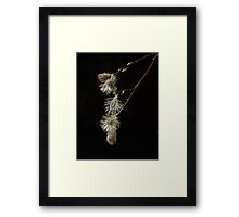 PussyWillow ... Spring is here !!! Framed Print