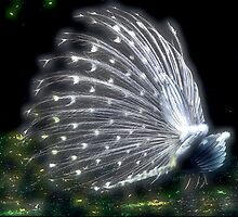 White Peacock by photosan