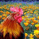 Poppycock by digitalmidge