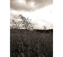 Blowin in da wind 1 Photographic Print
