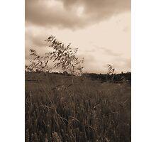 Blowin in da wind 2 Photographic Print