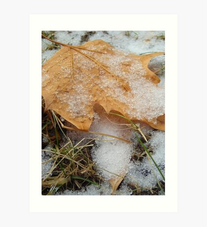 Fallen Snow and Leaves Art Print