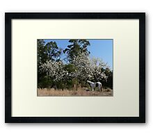 The Old Piebald & the Old Pear Trees - Warrens Lane Framed Print