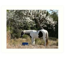 Paint Horse & Pear Trees Art Print