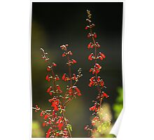 Backlit Wildflowers Poster