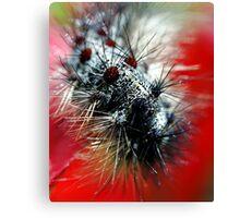 Caterpillar  Macro Canvas Print