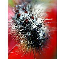 Caterpillar  Macro Photographic Print