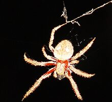 photoj Insects-Spider by photoj