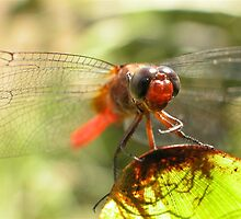 photoj Insects by photoj