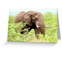 THE AFRICAN ELEPHANT - Oxodonta africana Greeting Card