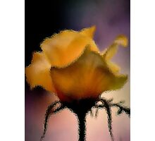 GLASS IMAGE; THE LIME ROSE Photographic Print