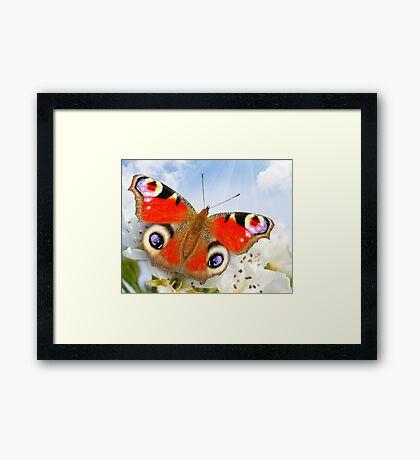 Butterfly! SALE! Framed Print