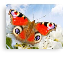 Butterfly! SALE! Canvas Print