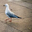 seagull by alyssa naccarella