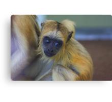 Baby howler monkey Canvas Print