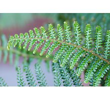 Sleepy Hollow Fern Photographic Print