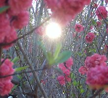 Seeping Through The Peach Blossom by AuXillary