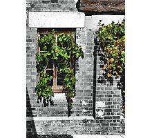 Window Ivy Photographic Print
