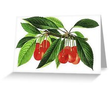 Red Cherries Vector on White Background Greeting Card
