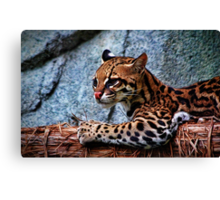 Ocelot Painted Canvas Print