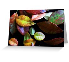 Colorful Collection Greeting Card