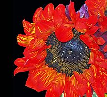 Red Sunflower by Bine