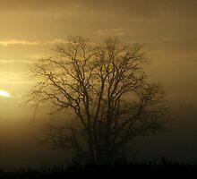 Sunrise on the Drop Zone II by Alex Weeks