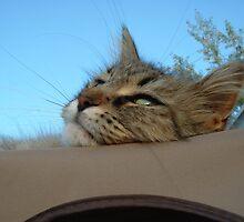 Lazy Day by Theodore J.  Glendinning II