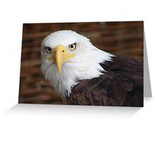 The Stunning Bald Eagle......... Greeting Card