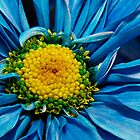 Blue Daisy by Sheryl Kasper