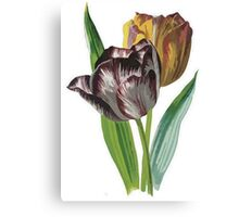 Tulip Vector on White Background Canvas Print