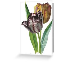 Tulip Vector on White Background Greeting Card