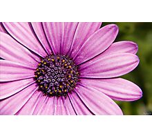 Flower details Photographic Print