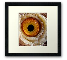 The dOvemaster sees something huge coming his way & he is worried Framed Print